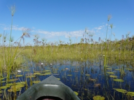 Front of Mokoro, Sarah Williams – Okavango Delta, Botswana