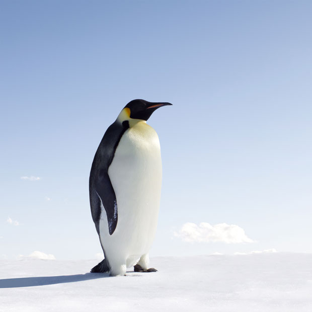 penguin watching holidays including emperor king penguins