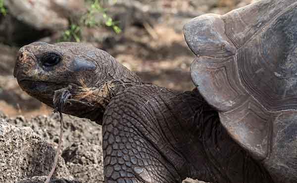 El Chato Tortoise Reserve