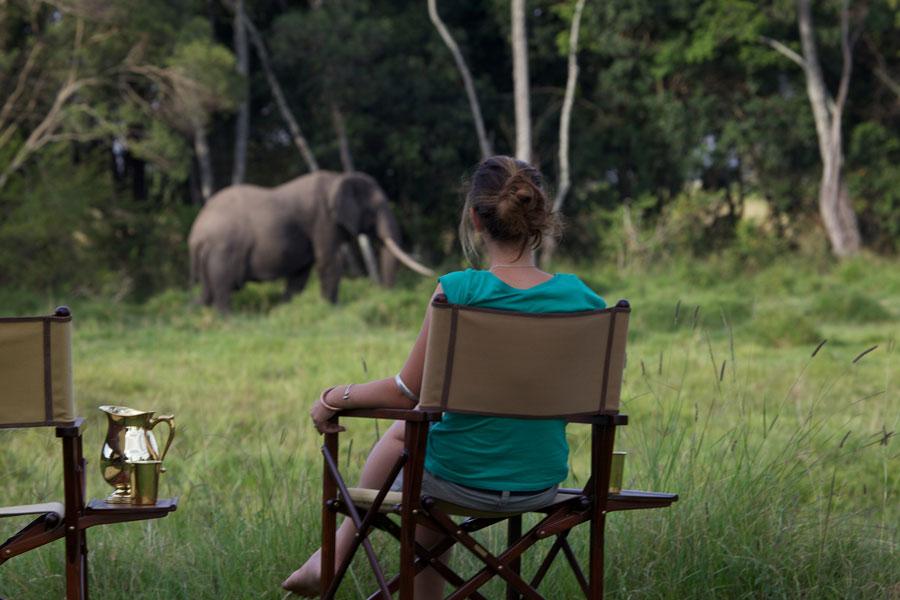 Elephant Pepper Camp Holiday Accommodation In Kenya