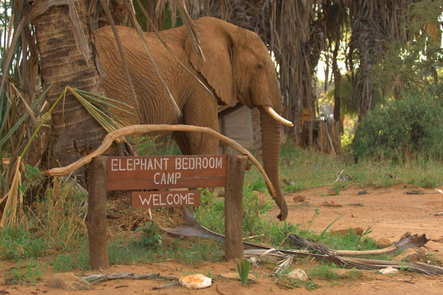 Elephant Bedroom Camp Holiday Accommodation In Kenya
