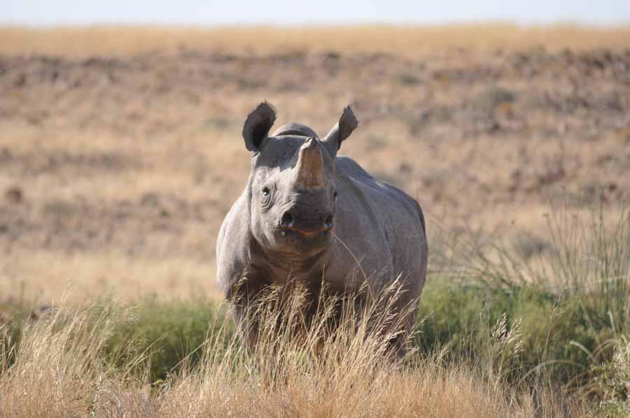 Namibia Self-drive Safari Namibia wildlife holiday | Africa