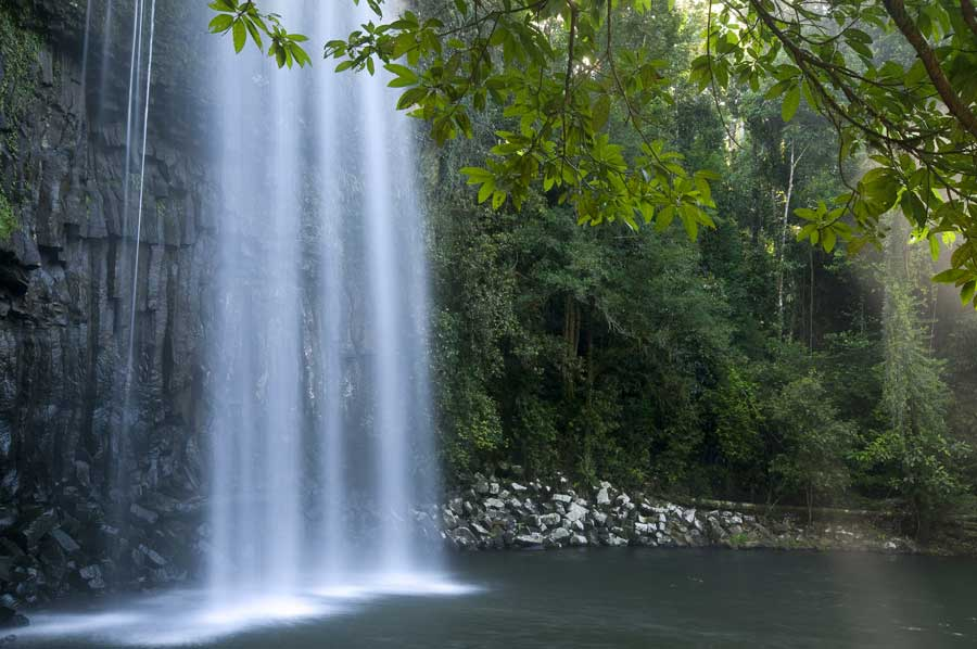 Atherton Tablelands Australia  city photo : Atherton Tablelands wildlife location in Australia, Asia & Australasia ...