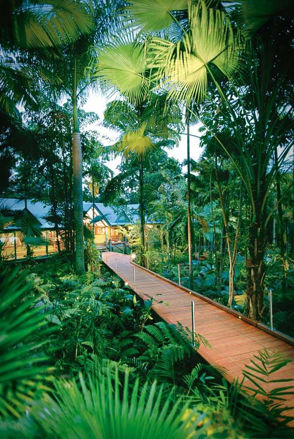 Silky oaks lodge asia australasia holiday accommodation for Australian rainforest