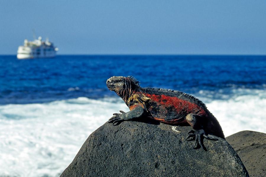 Wildlife Of Ecuador Amp The Galapagos Galapagos Islands
